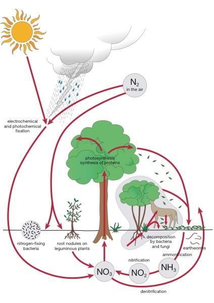 the nitrogen cycle ami digital